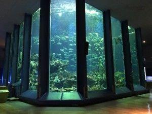 東海水族館3