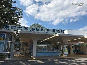 東海水族館2